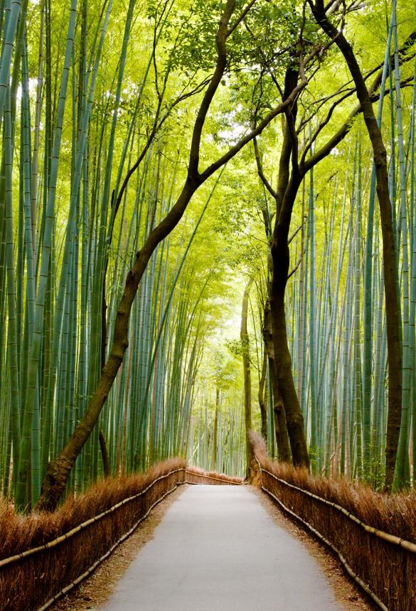 bambukova gora qponiq destinaciq turizam