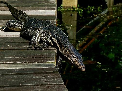 безплатни неща в сингапур резерват крокодил