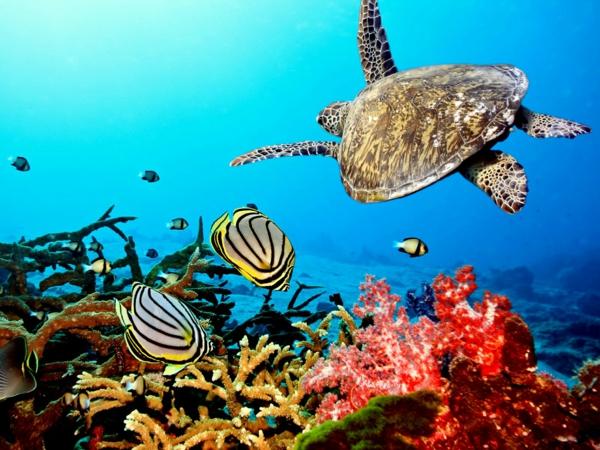 Бора Бора подводен свят