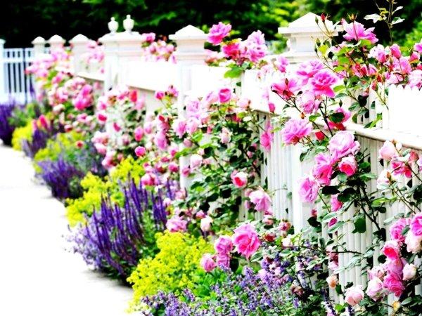 идеи декорация градина цветя