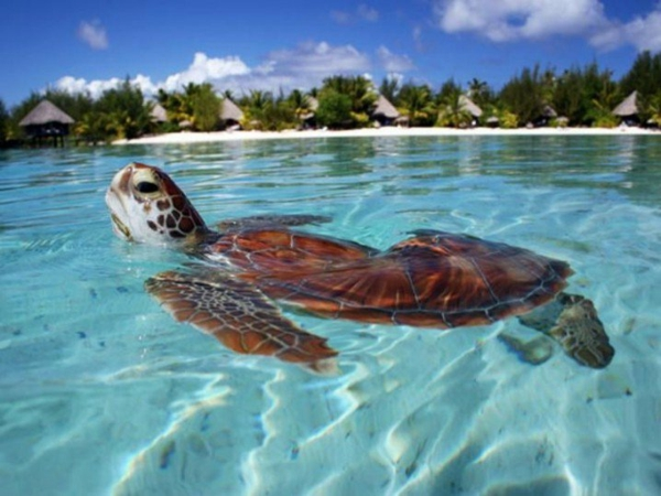 таити-плаж-френска-полинезия