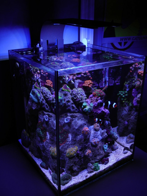 ideq za akvarium