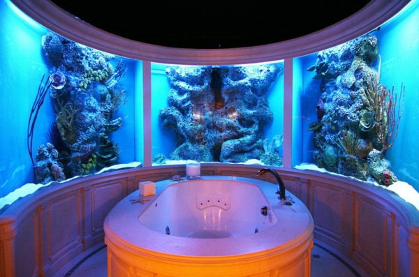 banq s akvarium ideq