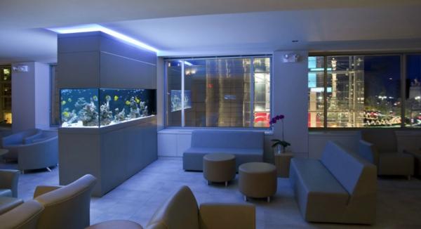 akvarium v hola