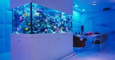 Интериорен дизайн с аквариум - идеи за красив дом