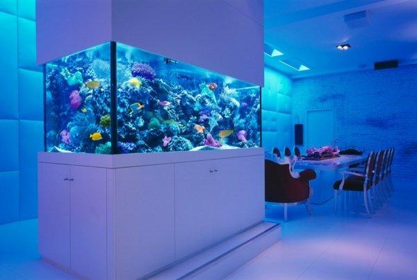 akvarium ideq obzavejdane