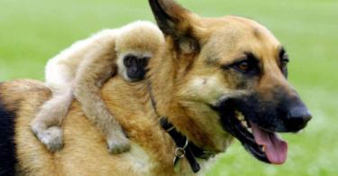 Необикновени приятелства между животни