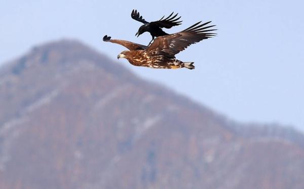 jivotni fotografiq ptici priqtelstvo orel