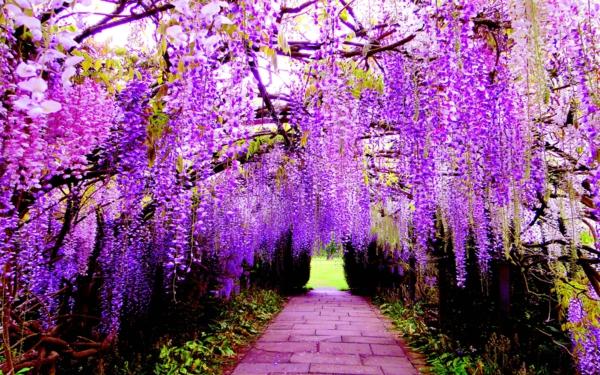 mesta po sveta wisteria tunel qponiq