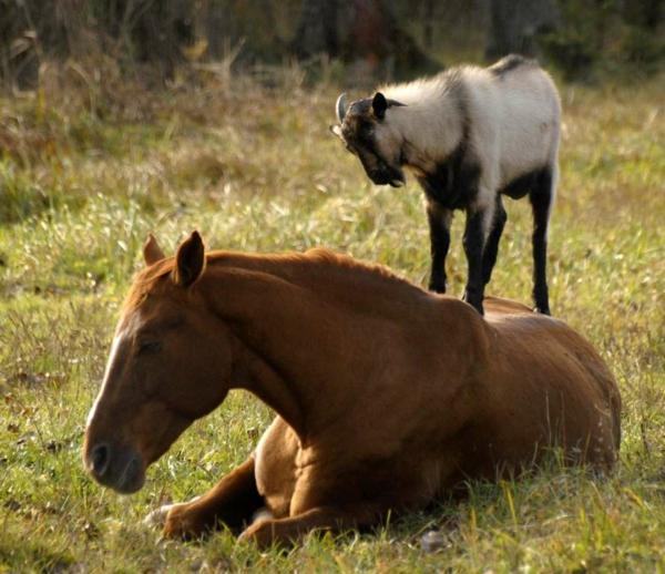 priqtelstvo jivotni fotografiq snimki kon koza