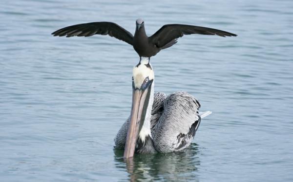 priqtelstvo jivotni snimki pelikan