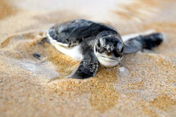 бразилия костенурки дестинация пясък природа