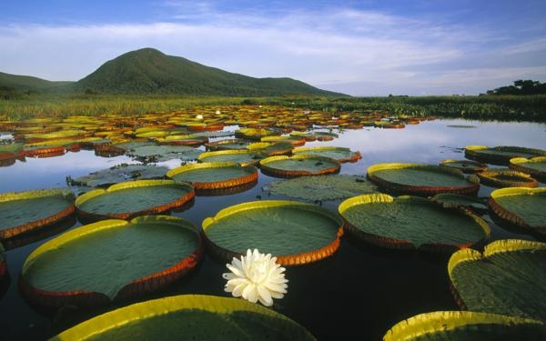 бразилия природа планина почивка забележителност