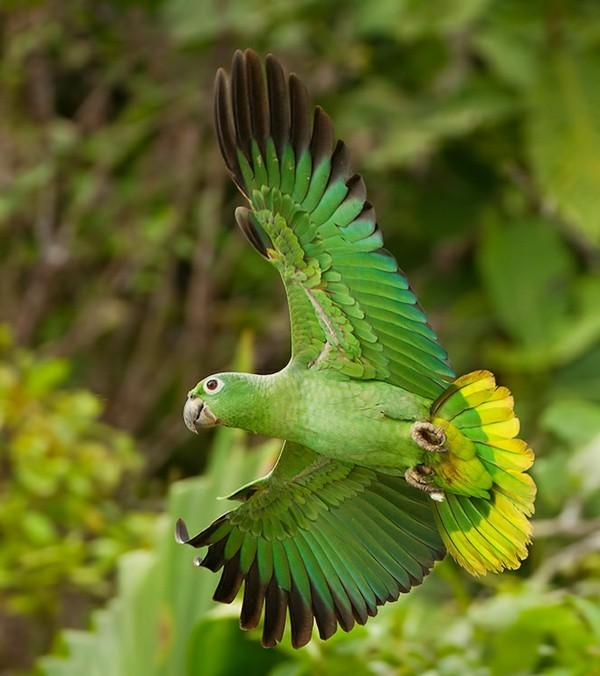 бразилия пътешествие джунгла папагал природа