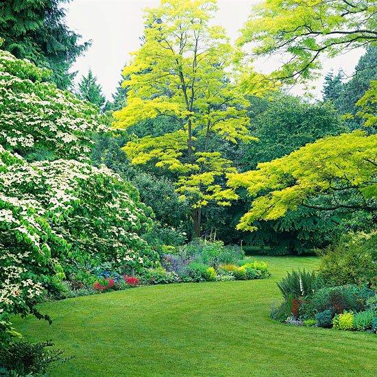 идеи за градината зелени растения дървета райграс