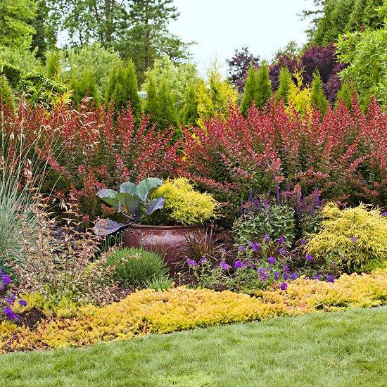 идеи градината контраст жълти цветя храсти растения