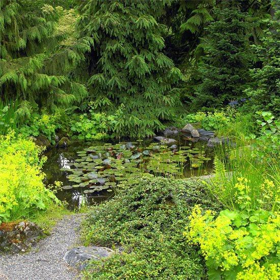 идеи градината природа дървета храсти