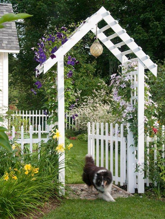 идеи градината ограда зелени растения