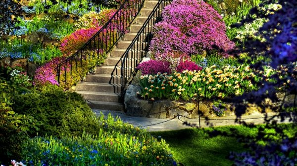 Градински цветя – едногодишни и многогодишни видове