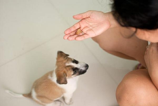 обучение-на-малко-куче