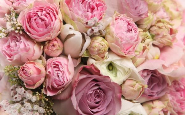 снимки на цветя