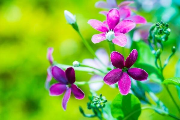 снимки-на-цветя