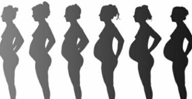 бременност по седмици