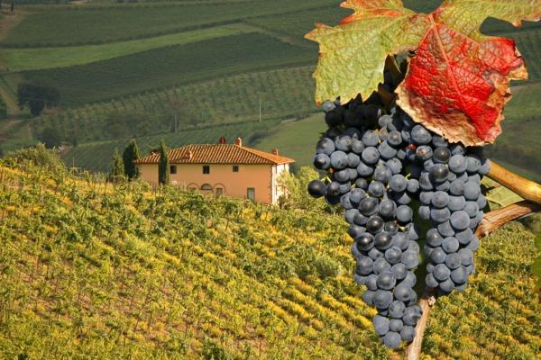виното в Тоскана