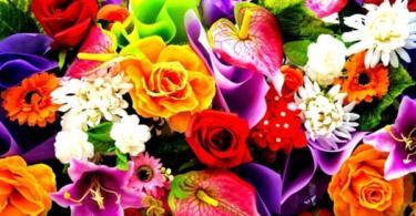 Снимки на цветя - разкош в цветове