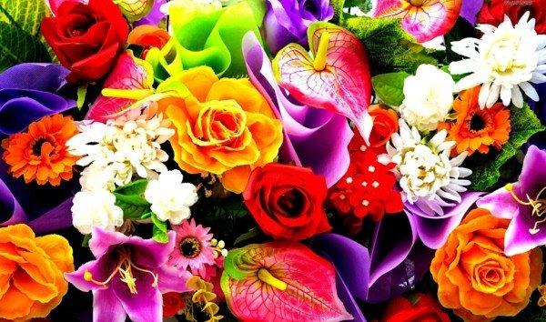 snimki na cvetq