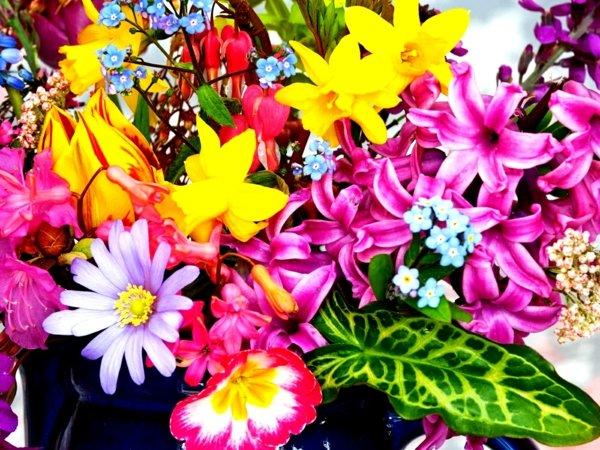 snimki na proletni cvetq