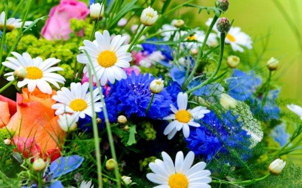 snimki na krasivi cvetq