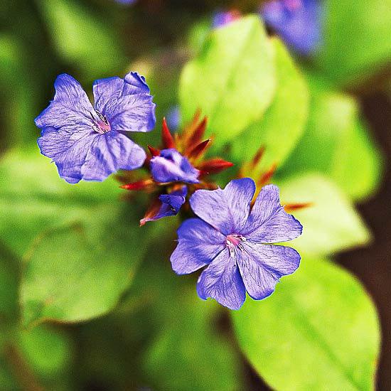 есенни-цветя-за-градина