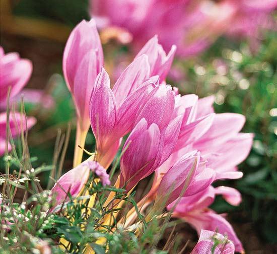есенни цветя за градина