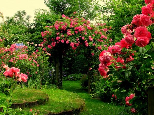 kak da podrejem roza