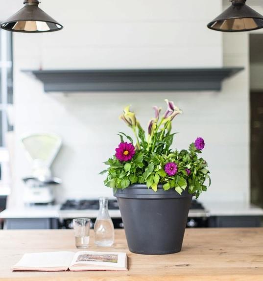 саксийни цветя в интериора