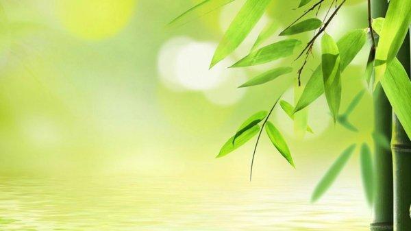 otglejdane na bambuk