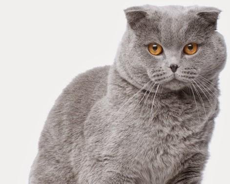 Кастрация на котка