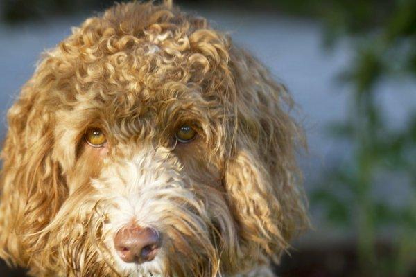 породи кучета за семейства с деца