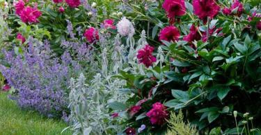 цветя-за-градината-3