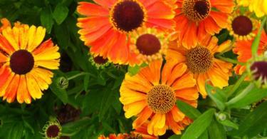 цветна-градина-в-двора-12