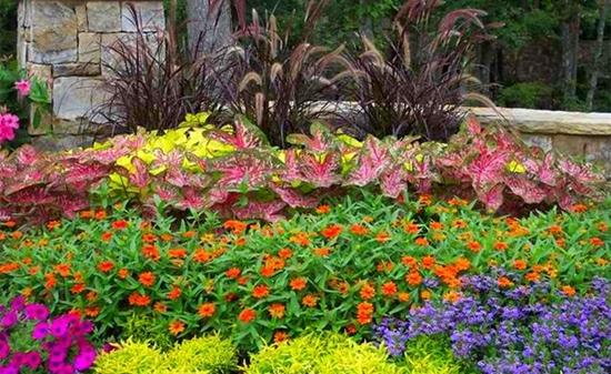 цветна-градина