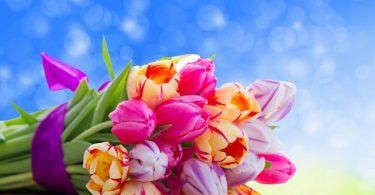 pojelaniq-za-cvetnica