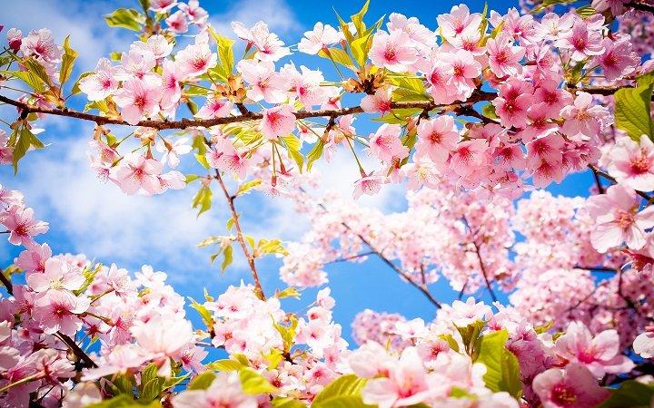 стихове за пролетта