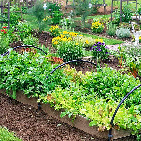 Зеленчукова градина в повдигнати лехи