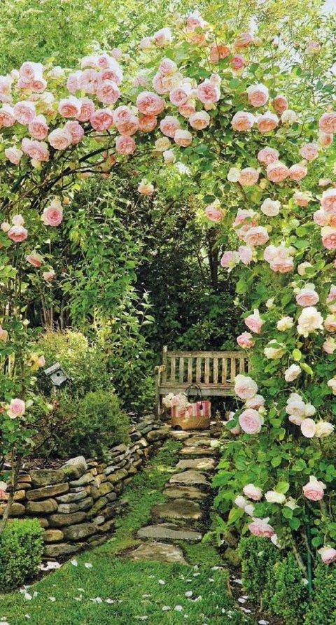 gradini s cvetq rozi