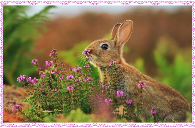 картички-с-цветя