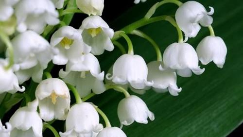 пролетни-цветя