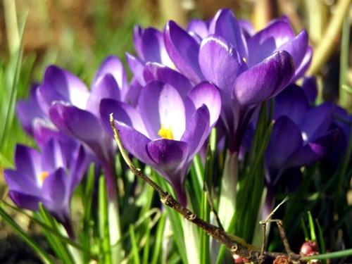 пролетни цветя