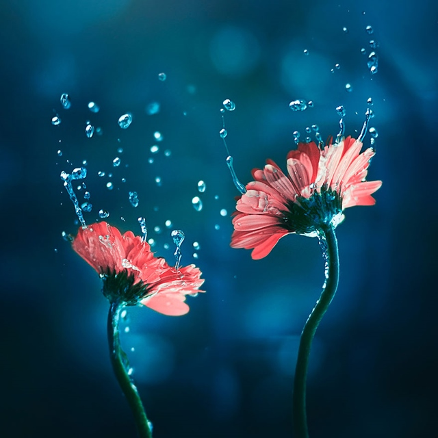 Снимки на цветя – красотата в малките неща